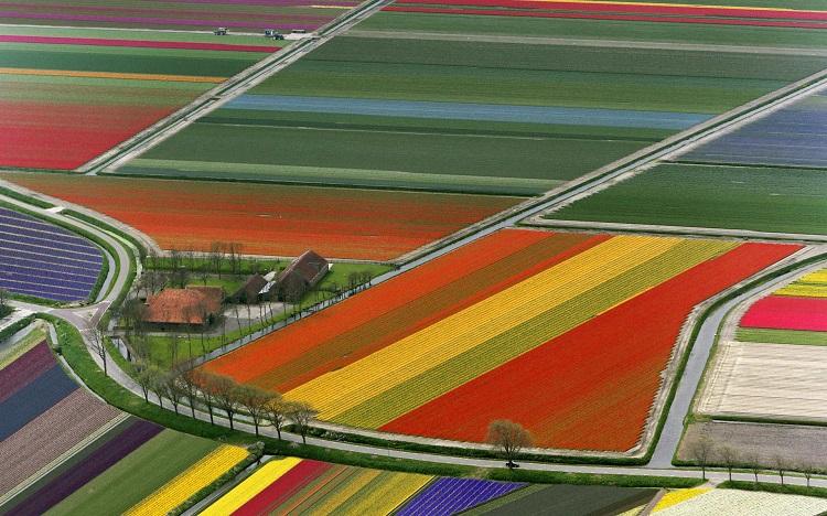 Viagem de carro pela Holanda - Campos de Tulipa