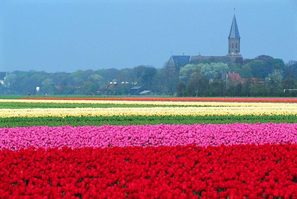 Belezas da Holanda